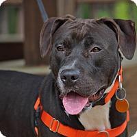 Adopt A Pet :: Violet - Pinehurst, NC