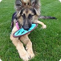 Adopt A Pet :: Sandals - Fargo, ND