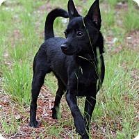 Adopt A Pet :: Hobo - Burbank, OH