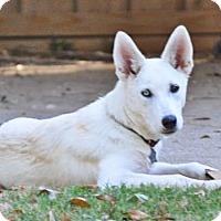 Adopt A Pet :: Quinn - Carrollton, TX