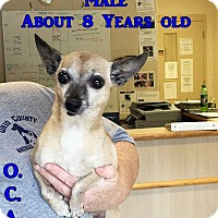 Adopt A Pet :: 1-9 - Triadelphia, WV