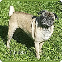 Adopt A Pet :: Chubbs - South Bend, IN