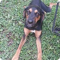 Hound (Unknown Type) Mix Dog for adoption in Charlotte, North Carolina - ZEUS