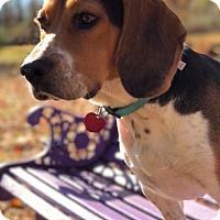 Adopt A Pet :: Snoopy - Long Beach, NY