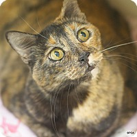 Adopt A Pet :: Belle - East Hartford, CT