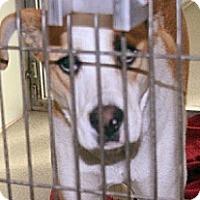 Adopt A Pet :: Daisy Mae - Wildomar, CA