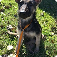 Adopt A Pet :: Pippa - Dripping Springs, TX