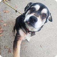 Adopt A Pet :: Bronx - Lafayette, IN