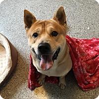 Adopt A Pet :: Sarge - Tulsa, OK