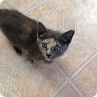 Adopt A Pet :: Jenny - Mobile, AL