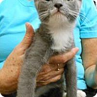 Adopt A Pet :: Princey - Reston, VA
