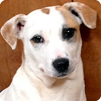 Adopt A Pet :: DAISY - Leland, MS