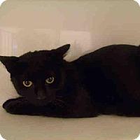 Adopt A Pet :: Tyrah - Herndon, VA