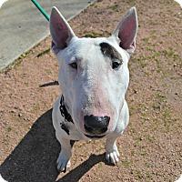 Adopt A Pet :: Steve - Houston, TX