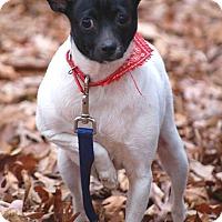 Adopt A Pet :: Melly - Carmel, IN