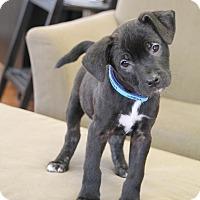 Adopt A Pet :: Penny Lane - Homewood, AL