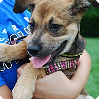 Adopt A Pet :: Sydney - Richmond, VA