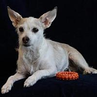 Adopt A Pet :: Millie - Phelan, CA