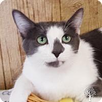 Adopt A Pet :: Mouse - Monroe, MI
