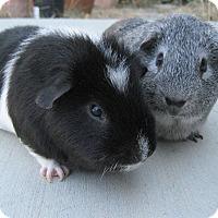 Adopt A Pet :: Bo & Eeyore - Fullerton, CA