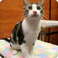 Adopt A Pet :: Whiskey - Greensboro, GA