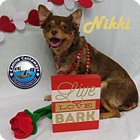 Adopt A Pet :: Nikki - Arcadia, FL