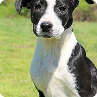 Adopt A Pet :: Jamie~meet me~ - Glastonbury, CT