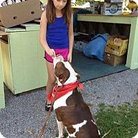 Adopt A Pet :: LUXE - Grafton, OH