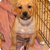 Adopt A Pet :: Timba - Towson, MD