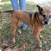 Adopt A Pet :: DAISY - Sanford, FL