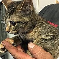 Adopt A Pet :: Lani - Loogootee, IN