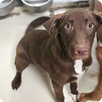 Adopt A Pet :: Tucker - Middlebury, CT