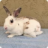 Adopt A Pet :: Rex - Bonita, CA