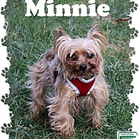Yorkie, Yorkshire Terrier Mix Dog for adoption in Fallston, Maryland - Minnie