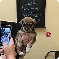 Adopt A Pet :: Jasmine - Thousand Oaks, CA