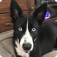 Adopt A Pet :: Dixie - Ormond Beach, FL