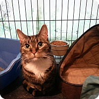 Adopt A Pet :: Lulu - Medford, NJ