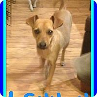 Adopt A Pet :: LENNON - Jersey City, NJ