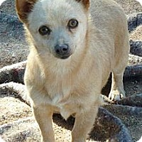 Adopt A Pet :: Nana - Las Cruces, NM
