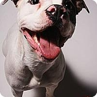 Adopt A Pet :: Finn - Louisville, KY