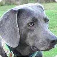 Adopt A Pet :: Zelda  **ADOPTED** - Eustis, FL