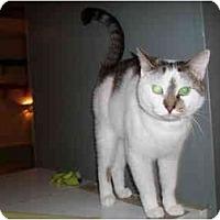 Adopt A Pet :: Darwin - Hamburg, NY
