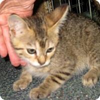 Adopt A Pet :: Raspberry - Dallas, TX
