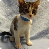 Adopt A Pet :: Mark Antony - Bentonville, AR