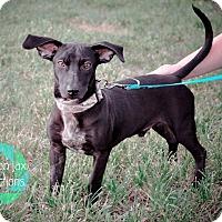 Adopt A Pet :: Zeke - Gainesville, FL