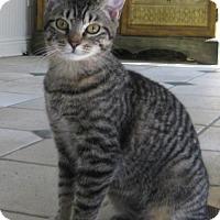 Adopt A Pet :: Jesse - Mobile, AL