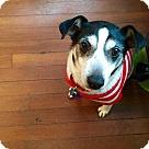 Adopt A Pet :: Waldo