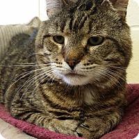Adopt A Pet :: Donny - Berlin, CT