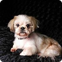 Adopt A Pet :: Yogi West - Urbana, OH