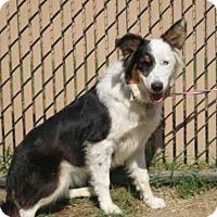 Adopt A Pet :: *KYRA - Norco, CA